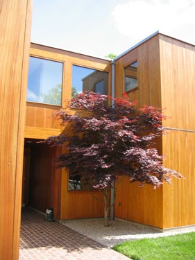Japanese Maple complements the glass and wood walls of the Korman House.